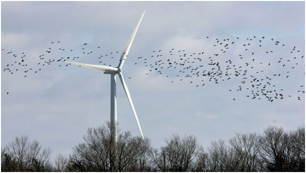 how many birds are killed by wind turbines